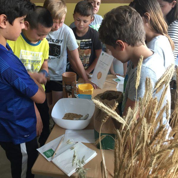 Sommer.Erlebnis.Bauernhof – Entdecken, wo das Essen herkommt